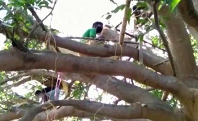 Hindistan'da sıra dışı karantina: 14 gün boyunca ağaçlarda yaşayacaklar