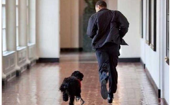 Barack Obama'nın 12 yıllık köpeği Bo öldü