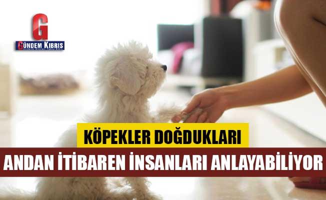 Köpekler doğdukları andan itibaren insanları anlayabiliyor