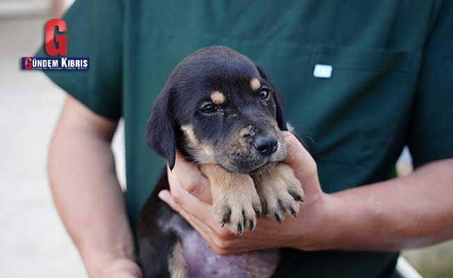 Selde kurtarılan yavru köpeğe 'Mucize' ismi verildi